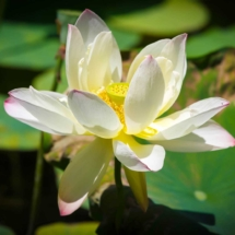 WHITE.FLOWER